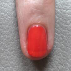 popexotic-yr-orange tropicale-02