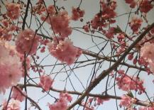 uitje naar Japanse tuin - 04