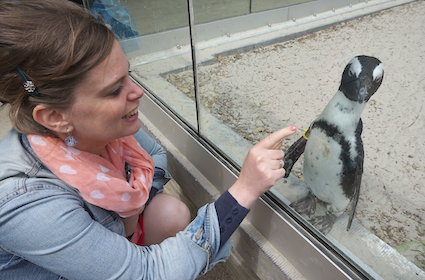 grappige pinguins
