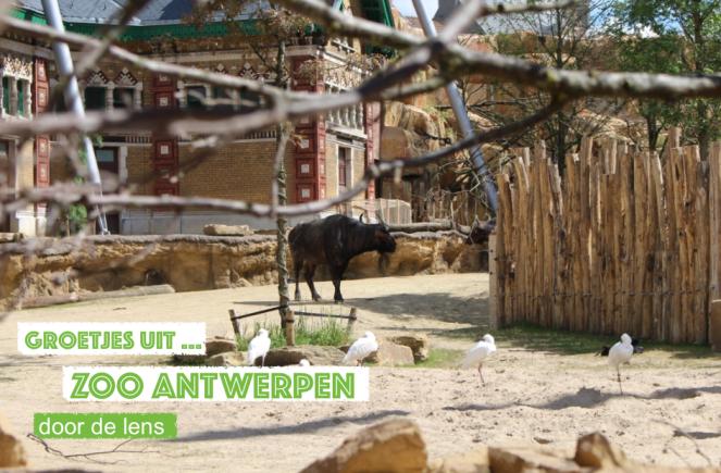 groetjes uit Zoo Antwerpen, een beestig leuke dag!