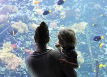 onderwaterwereld met Nemo, Dory & piraten verhalen...