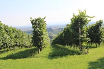 cabiasi-zicht-tussen-de-wijnstruiken