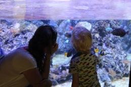 civic-aquarium-dory-bezoeken