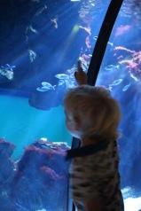 civic-aquarium-visje-kijken-onder-water