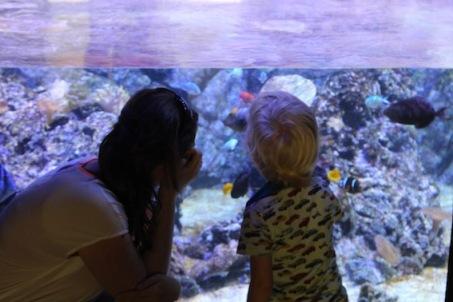 milaan-nemo-zoeken-in-aquarium