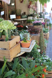 zuiders-bloemenwinkeltje