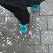 wandel update - wandeling linkeroever tussen de bloesem