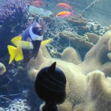 catboy ontdekt kleurijke vissen bij sea life londen
