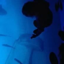 geen ontkomen aan loop over het water om een magische wereld van vissen te ontdekken