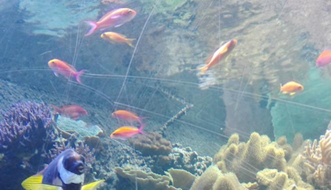 Kleurijke visjes in de wondere onderwaterwereld bij Sea Life Londen