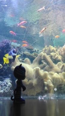 Londen aquarium - vissen kijken