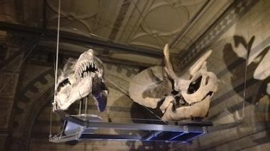 natuurhistorisch museum - dinos
