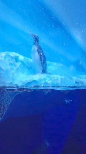 pinguïns in hun uppie bij sea life londen