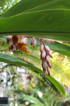 Hortus Amsterdam - tropische bloemen