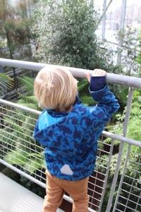 Hortus Botanicus Amsterdam - boven de palmen