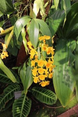 Hortus Botanicus Amsterdam - orchidee
