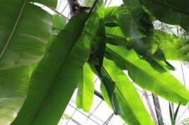 Hortus Botanicus Amsterdam - palmen