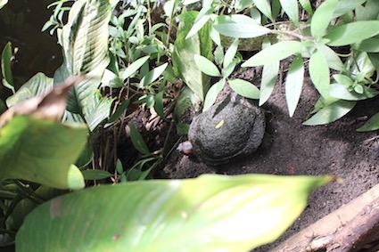 Hortus Botanicus Amsterdam - schildpad zoektocht