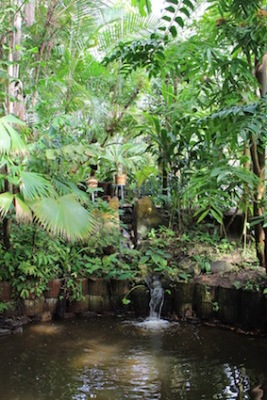 Hortus Botanicus Amsterdam - tropische tuin
