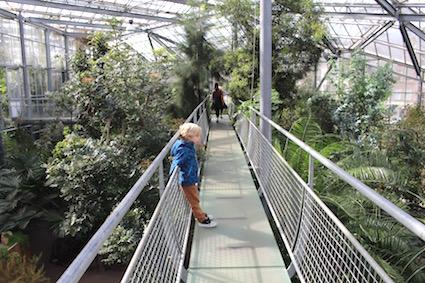 Hortus Botanicus Amsterdam - tussen de palmen