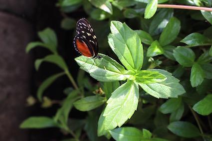 Hortus Botanicus Amsterdam - vlinderkast