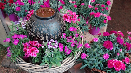 Tuindagen Beervelde - sfeervolle bloemen
